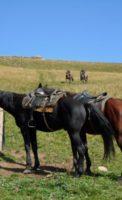 Прокат лошадей в свободный день